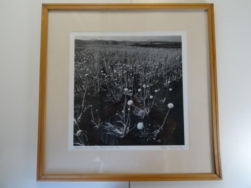 Paul Fumière:  foto van een veld van uien te Lanzarotte 1991
