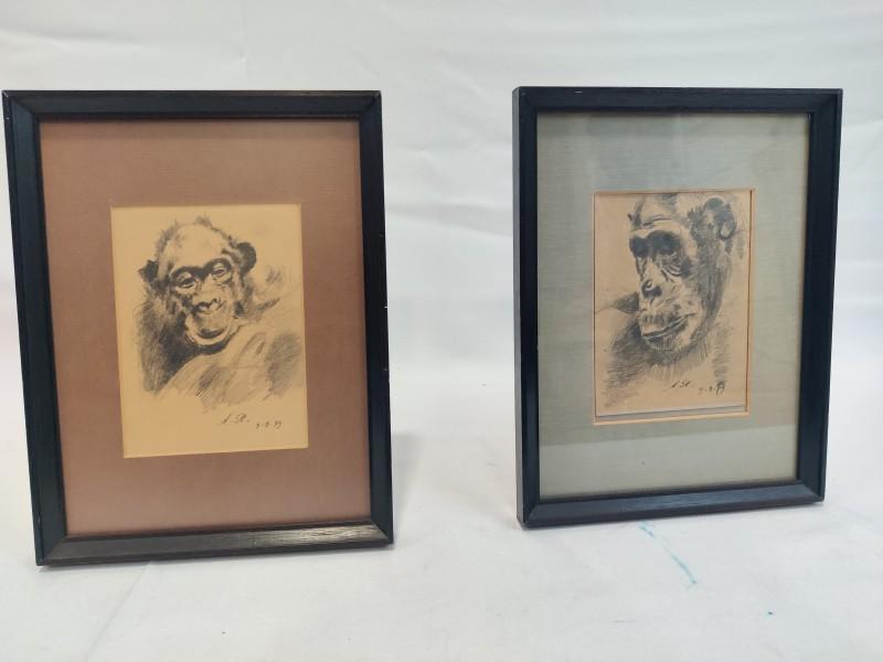 2 schetsen van apenkopjes